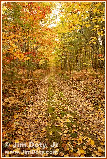 Road, Hiawatha National Forest. Photo copyright Jim Doty Jr.