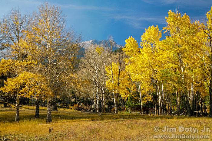 Aspen Grove, Horseshoe Park, RMNP