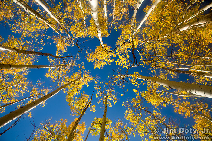 Aspen Grove, Marshall Pass
