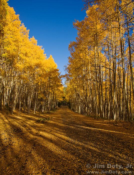 Aspen, Marshall Pass, Colorado