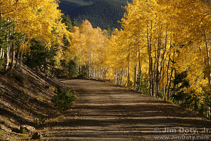 Aspen, Marshall Pass, Colorado