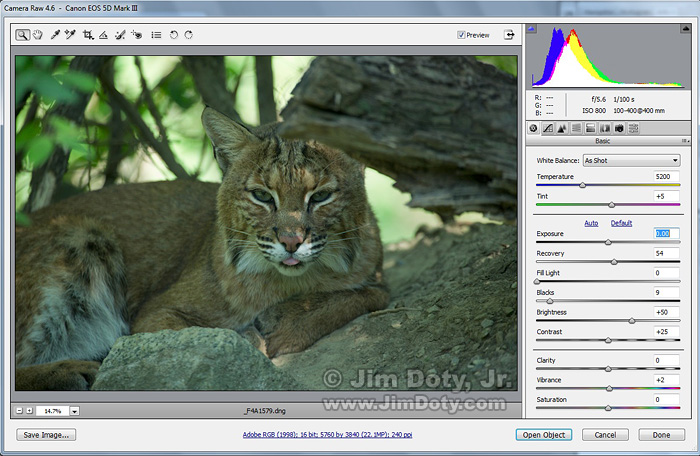 Bobcat photo in ACR