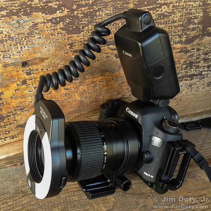 Canon 5D Mark III, Canon MP-E 65mm f/2.8 1-5x Macro Photo Lens, and Canon MR-14EX Ring Lite.