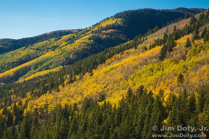 Aspen, Marshall Pass, Colorado.