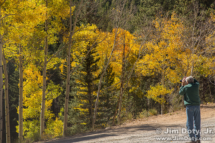 Photographer and Aspen, Marshall Pass, Colorado.