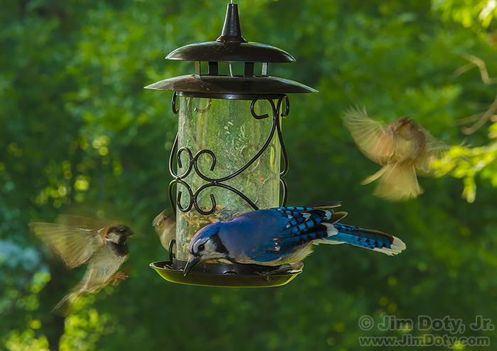 Action at the bird feeder. Remote camera controlled by CamRanger.