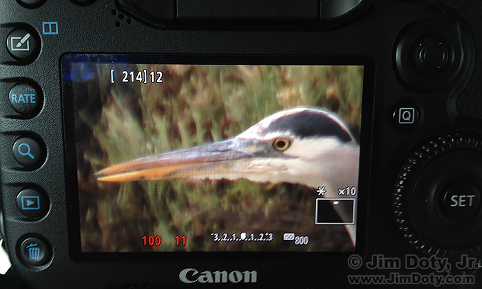 "Great Blue Heron, ""Live View"" mode at 10X magnification."
