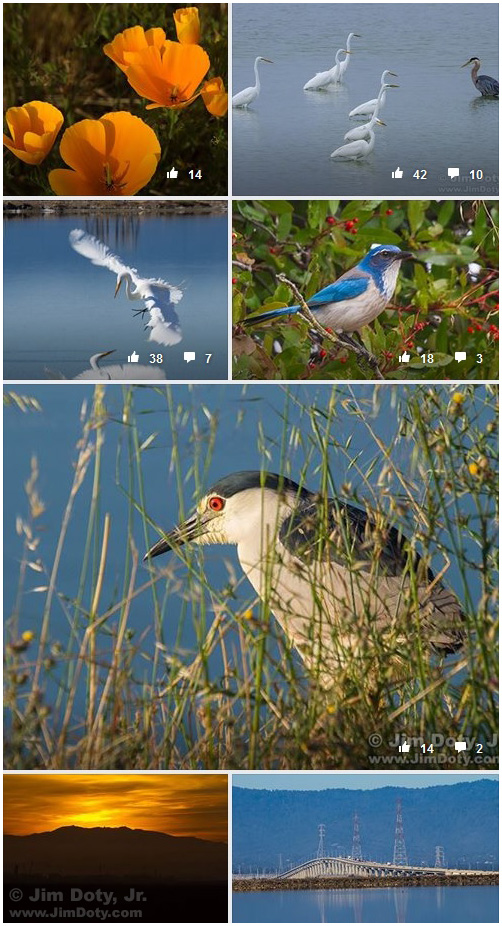 Some of my photos posted at the Don Edwards NWR Facebook page.