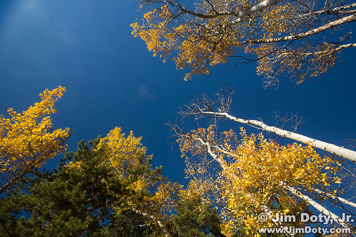 Aspen with sun flare, Rocky Mountain National Park. Colorado