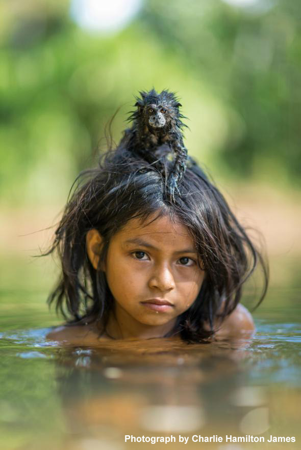 A pet saddleback tamarin hangs on to Yoina Mameria Nontsotega as the Matsigenka girl takes a dip in the Yomibato River, deep inside Peru's Manú National Park. Photo by Charlie Hamilton James.