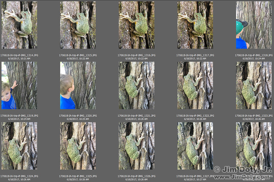 Tree frog photos in Adobe Bridge.