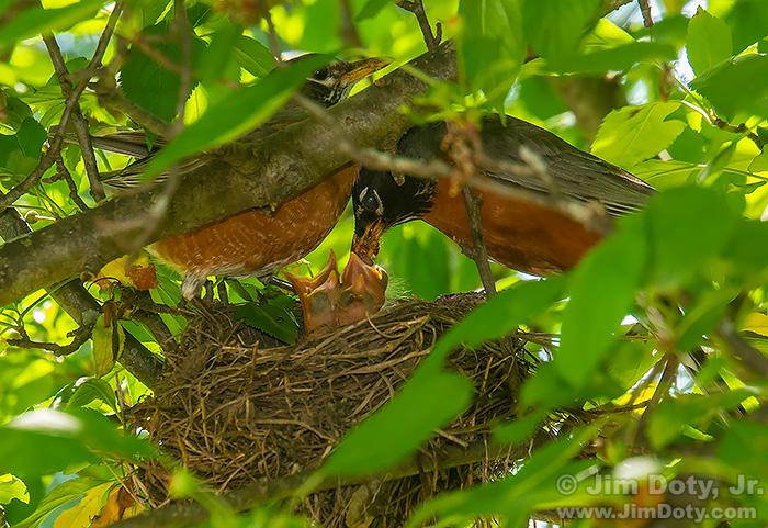 Robin's at the Nest, Columbus Ohio