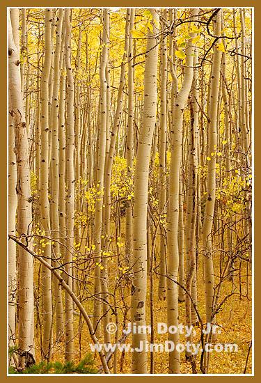 Aspen, MArshall Pass Colorado. Photo copyright Jim Doty Jr.