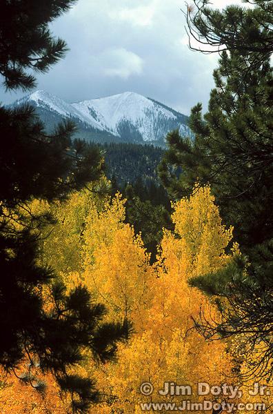 Aspen and Porphyry Peak near O'Haver Lake, Colorado. September 30.