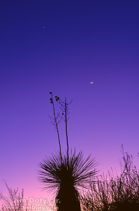 Moon and Venus over Yucca, White Sands New Mexico. Monday, January 25, 1993.