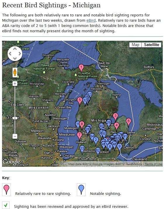 Recent bird sightings in Michigan