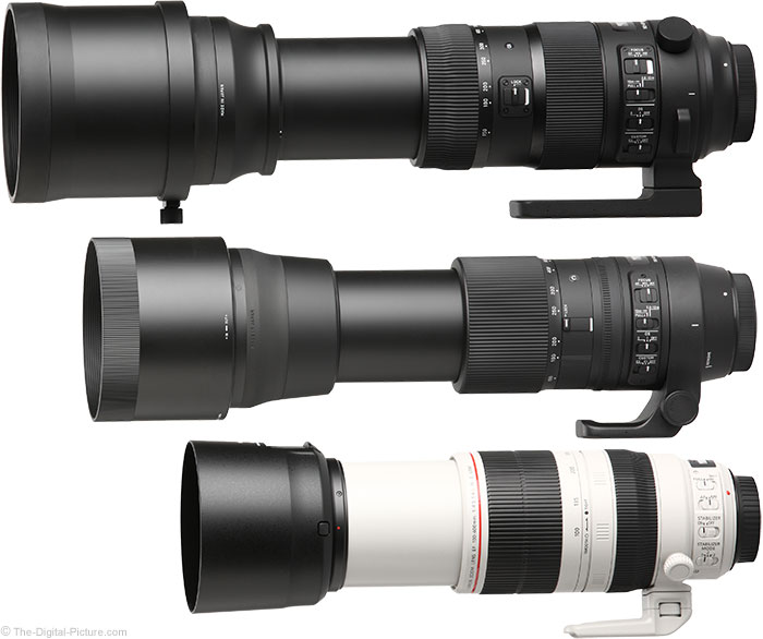 Sigma 150-600mm Sports and Contemporary Comparison to Canon. Photo by The Digital Picture