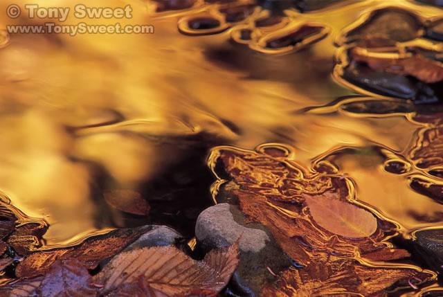 Golden Brook. Photo © Tony Sweet